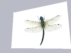 Dragon Fly In Colour Flying  by Eeeee