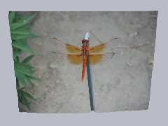 Dragonfly1 by Fantomas