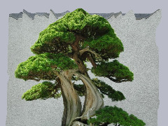 Tree at the National Bonsai Museum in Washington DC. by Wtangel
