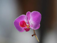 Orchid by Chris