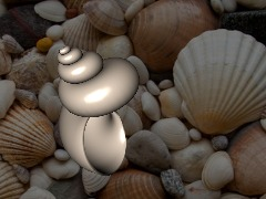 Sea Shell by Chris