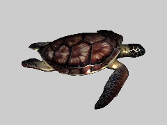 Sea Turtle 3D by Noears