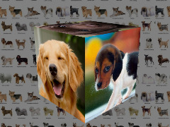 Dogs Cube by Alain